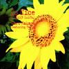 葉加瀬太郎 フィーチャリング・バーシア / So Nice(SUMMER SAMBA) [CD] [シングル] [1999/08/21発売]