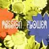 T-スクェア / Passion Flower