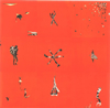 ANIMAL COLLECTIVE / ホリンドアゲイン [CD] [アルバム] [2006/12/02発売]