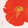 矢野真紀 / 窓 [CD+DVD] [CD] [シングル] [2007/09/26発売]
