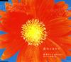 坂本サトル&Rosyと気のいい仲間たち / 花のとなりで [CD] [シングル] [2007/10/03発売]