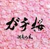 湘南乃風 / ガチ桜