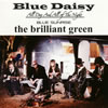 the brilliant green / Blue Daisy