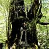 天野月 / 天の樹