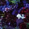 Aimer(エメ) / あなたに出会わなければ〜夏雪冬花(かせつとうか)〜 / 星屑ビーナス [CD+DVD] [限定]