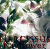 Rayflower / NARCISSUS