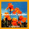 T-スクェア / スイート&ジェントル [SA-CD] [CD] [アルバム] [1999/07/01発売]