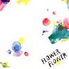 FLOWER FLOWER / 実