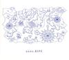 nano.RIPE / シアワセのクツ [Blu-ray+CD] [限定]