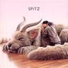 スピッツ / 醒めない [Blu-ray+CD] [SHM-CD] [限定]