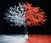 Aimer / 茜さす / everlasting snow