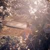 カネコアヤノ、新作EP『ひかれあい』の特設サイトを公開
