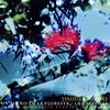 森に夢見る〜大聖堂〜バリオス練習曲集 鈴木大介(G) [CD] [アルバム] [2017/07/12発売]