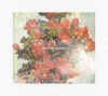 GRAPEVINE / ROADSIDE PROPHET(20th Anniversary Limited Edition) [CD+DVD] [限定]