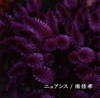 南佳孝 / ニュアンス [CD] [シングル] [2018/01/24発売]