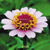 Arim - きみのもとへ [CD]