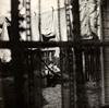 ポール・マッカートニー / ケイオス・アンド・クリエイション・イン・ザ・バックヤード〜裏庭の混沌と創造 [紙ジャケット仕様] [SHM-CD] [限定] [アルバム] [2018/05/18発売]