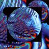 SAKIKO OSAWA / SAKIKO OSAWA [CD] [アルバム] [2018/12/12発売]
