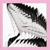 bird / 波形 [CD] [アルバム] [2019/03/20発売]
