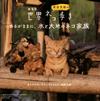 『劇場版 岩合光昭の世界ネコ歩き』第2弾のサントラが発売に