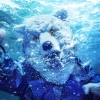 MAN WITH A MISSION / INTO THE DEEP [CD+DVD] [限定]