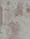 椎名林檎/椎名林檎と彼奴等の居る真空地帯 [DVD] [2018/11/21発売]