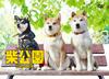 柴公園 TVシリーズ DVD-BOX〈3枚組〉 [DVD] [2019/04/26発売]