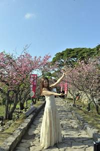 ふくい舞、沖縄の世界遺産で桜前線ツアーをスタート!