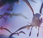 聴き手を魅惑のショート・クルーズにいざなう、石野卓球、6年ぶりのソロ・ミニ・アルバム『CRUISE』が完成!