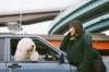 土岐麻子、新曲「ソルレム」配信開始 1年半ぶりとなるツアーもスタート