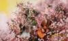 ゆず、四季折々の花と共に歌う「花咲ク街」MV公開 アルバムに先駆け楽曲先行配信スタート