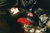 アイナ・ジ・エンド、新曲「虹」配信開始&OSRIN(PERIMETRON)が手がけたMV公開