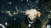 米津玄師、アルバム『STRAY SHEEP』年間ランキング22冠獲得 感謝の新CMスタート