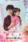 主演・中島健人×松本穂香 Netflix映画『桜のような僕の恋人』予告映像&ティザー・アート公開